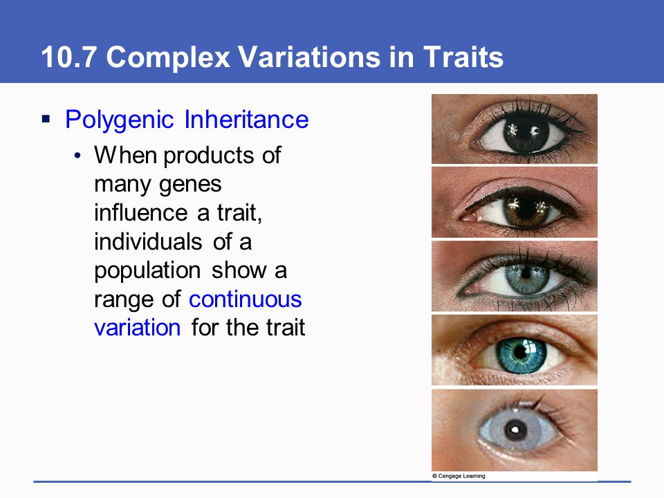 10.7 Complex Variations in Traits  Polygenic Inheritance When products of many genes influence a trait, individuals of a population show a range of c