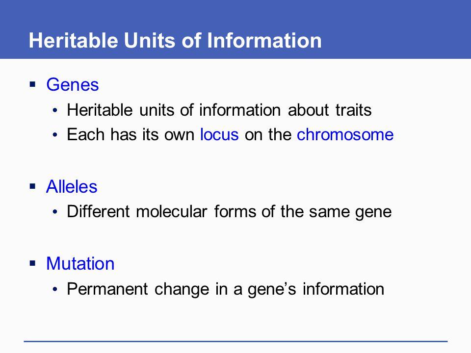Heritable Units of Information  Genes Heritable units of information about traits Each has its own locus on the chromosome  Alleles Different molecu