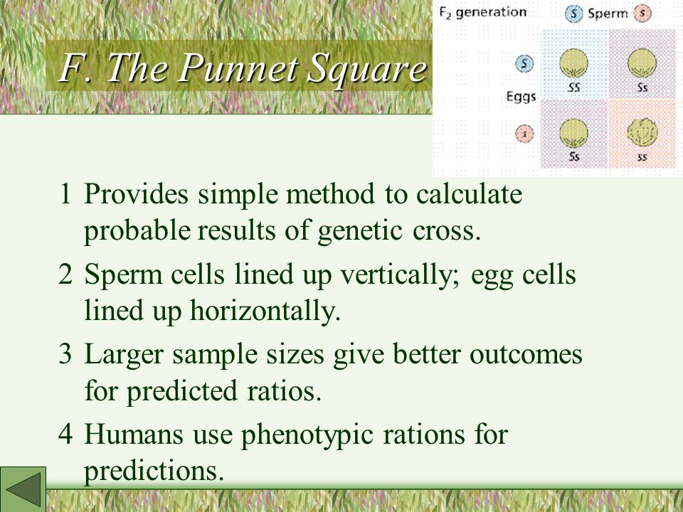 F. The Punnet Square 1Provides simple method to calculate probable results of genetic cross.