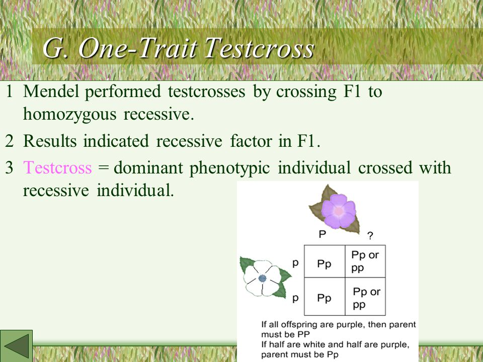 G. One-Trait Testcross 1Mendel performed testcrosses by crossing F1 to homozygous recessive.