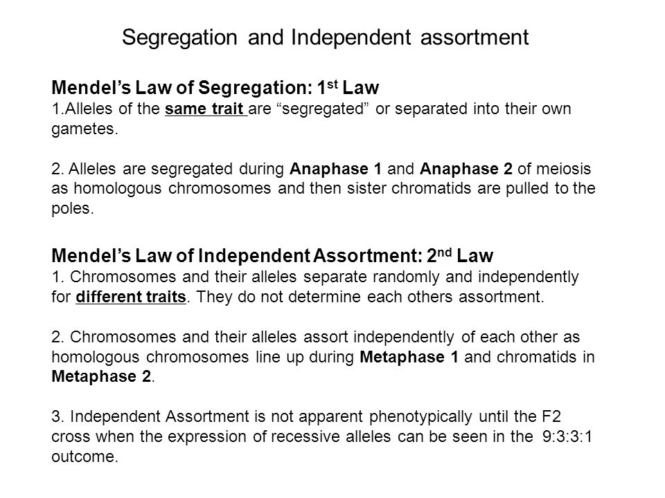 Segregation and Independent assortment Mendel's Law of Segregation: 1 st Law 1.Alleles of the same trait are segregated or separated into their own gametes.