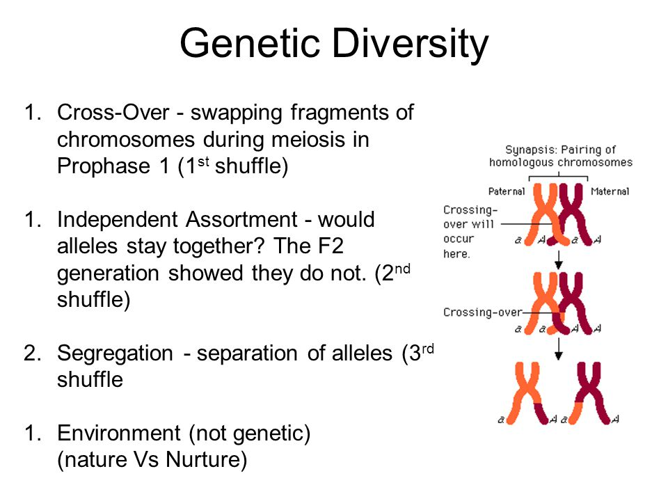 Other Gene Expressions (not a dominant recessive expression) 1.