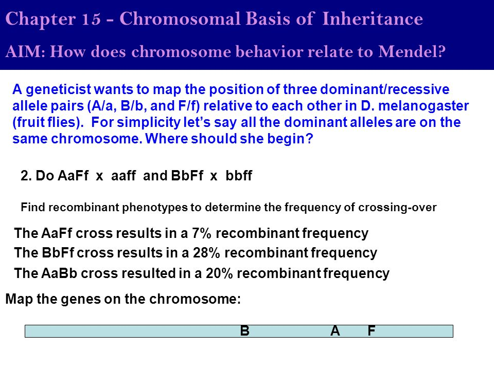 Chapter 15 - Chromosomal Basis of Inheritance AIM: How does chromosome behavior relate to Mendel? A geneticist wants to map the position of three domi