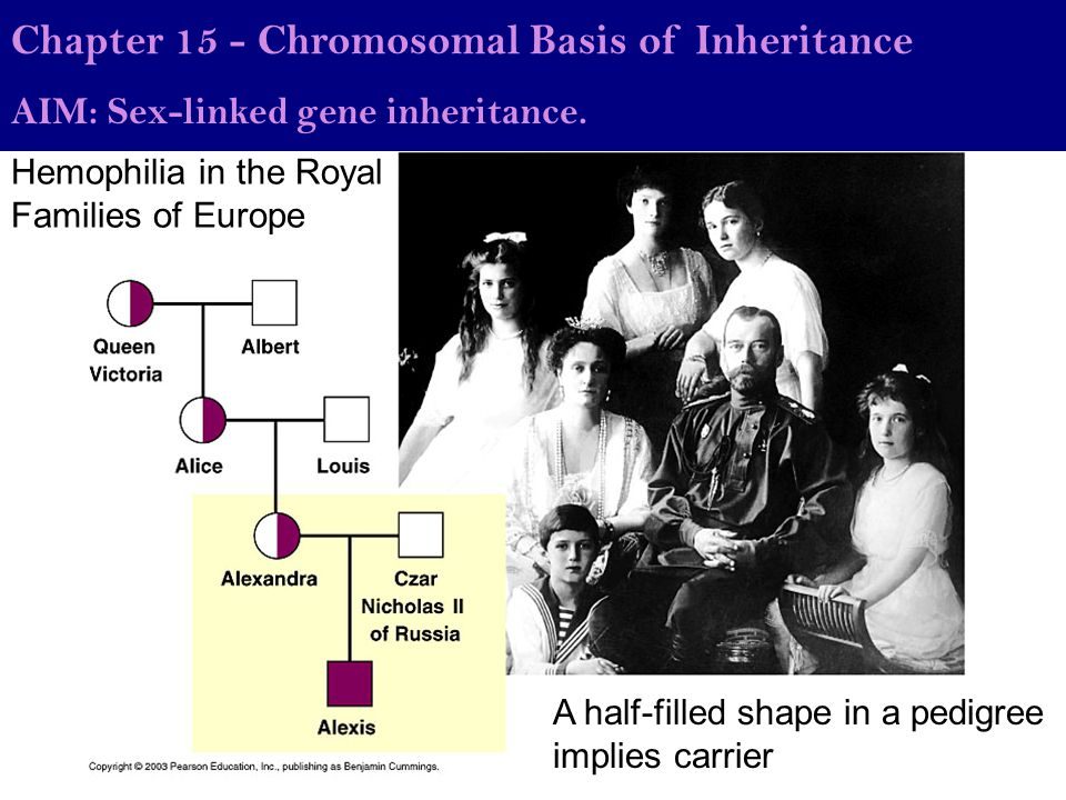 Hemophilia in the Royal Families of Europe AIM: What are sex-linked genes and what makes them different from autosomal genes.