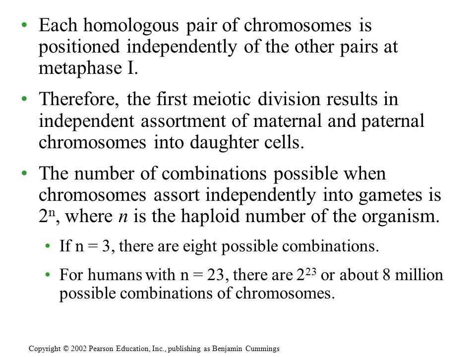 Independent assortment alone would find each individual chromosome in a gamete that would be exclusively maternal or paternal in origin.