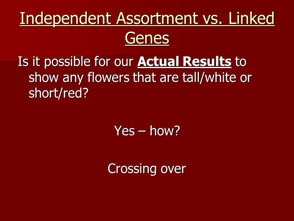 Independent Assortment vs. Linked Genes Is it possible for our Actual Results to show any flowers that are tall/white or short/red? Yes – how? Crossin