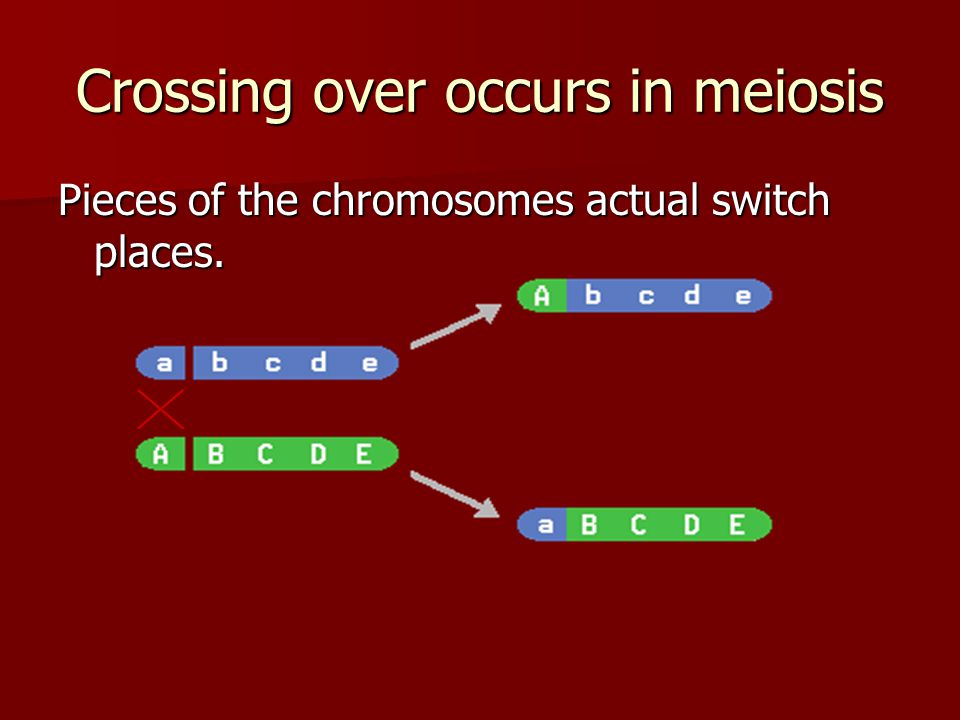 Crossing over occurs in meiosis Pieces of the chromosomes actual switch places.