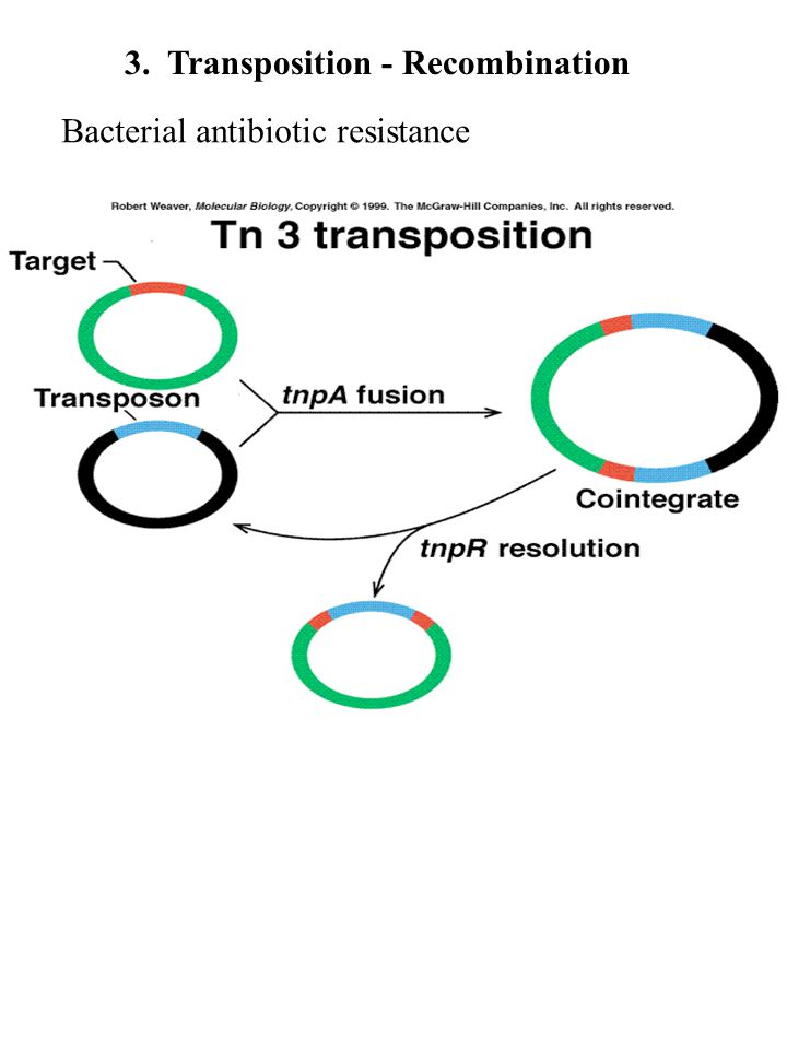 3. Transposition - Recombination Bacterial antibiotic resistance