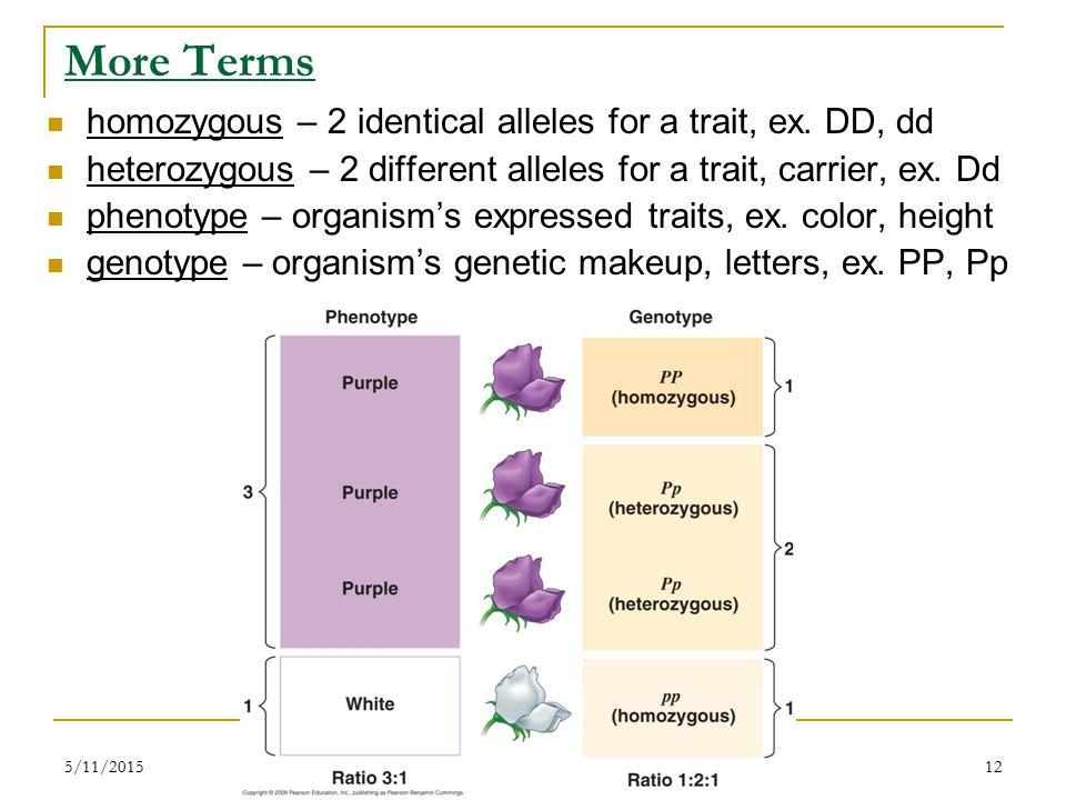 5/11/201512 More Terms homozygous – 2 identical alleles for a trait, ex.