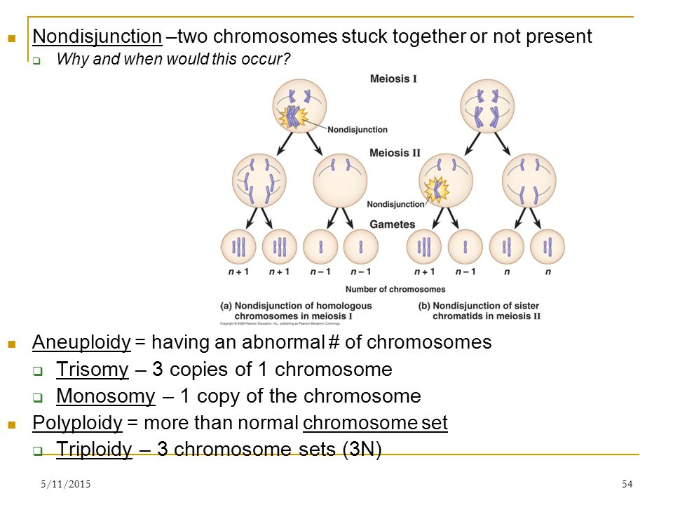 5/11/201554 Nondisjunction –two chromosomes stuck together or not present  Why and when would this occur.
