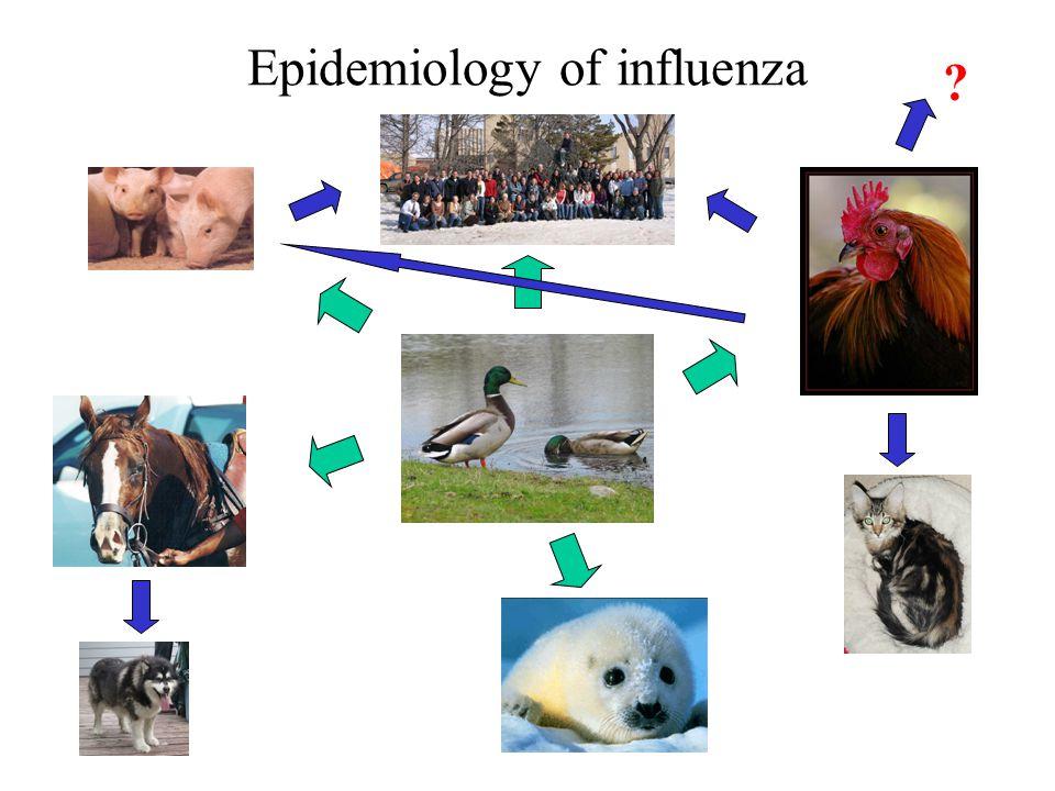 Epidemiology of influenza ?
