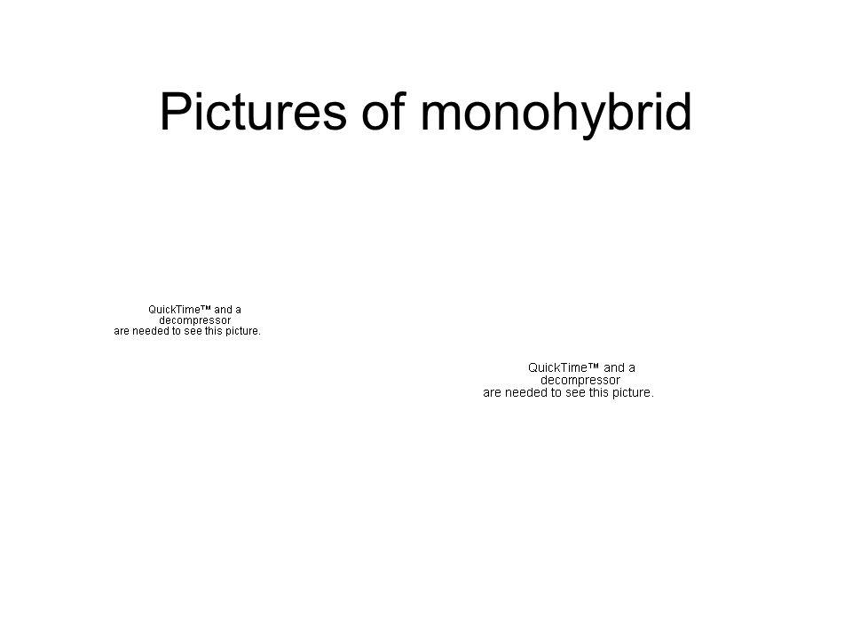 Pictures of monohybrid