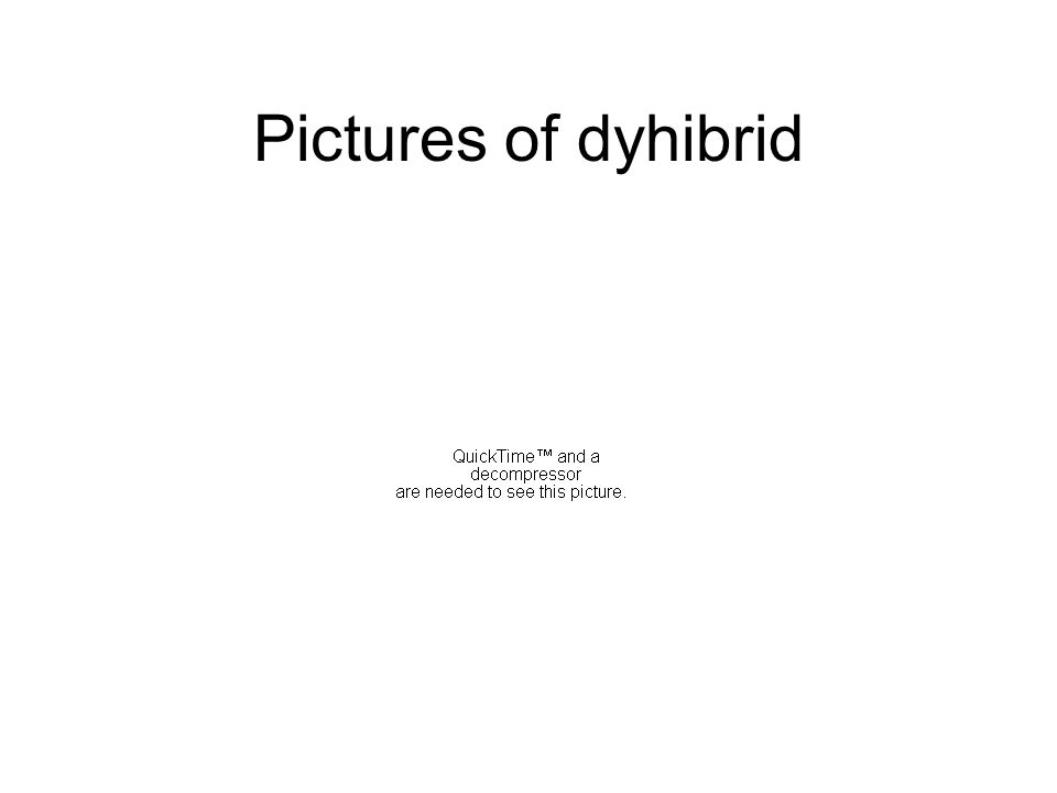Pictures of dyhibrid