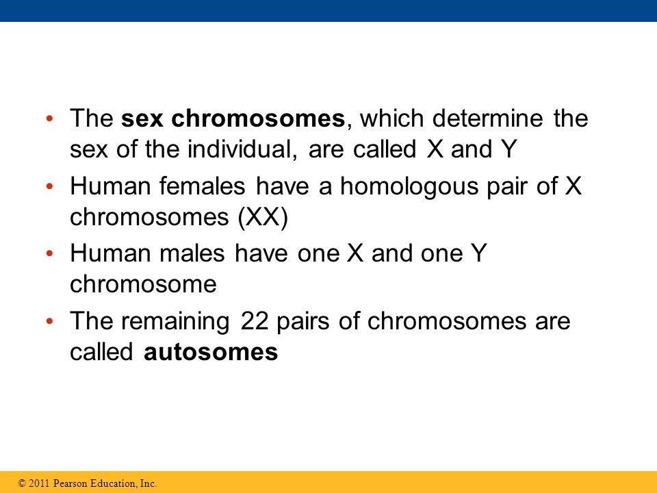 The sex chromosomes, which determine the sex of the individual, are called X and Y Human females have a homologous pair of X chromosomes (XX) Human ma