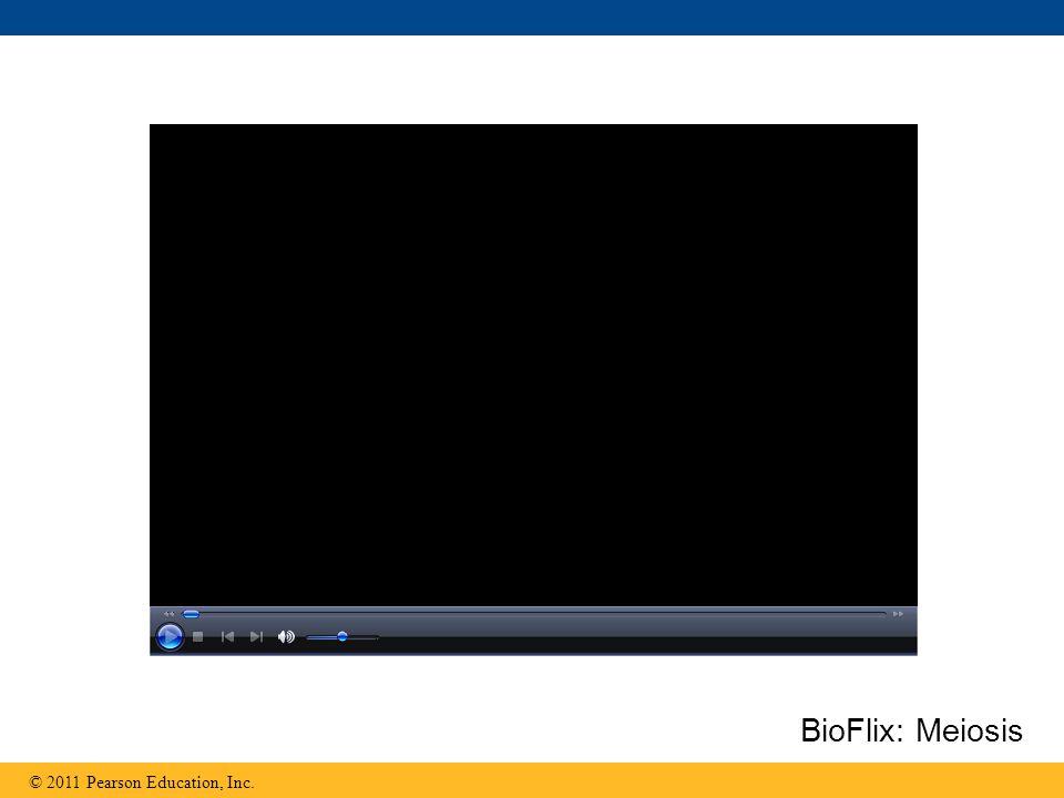 BioFlix: Meiosis
