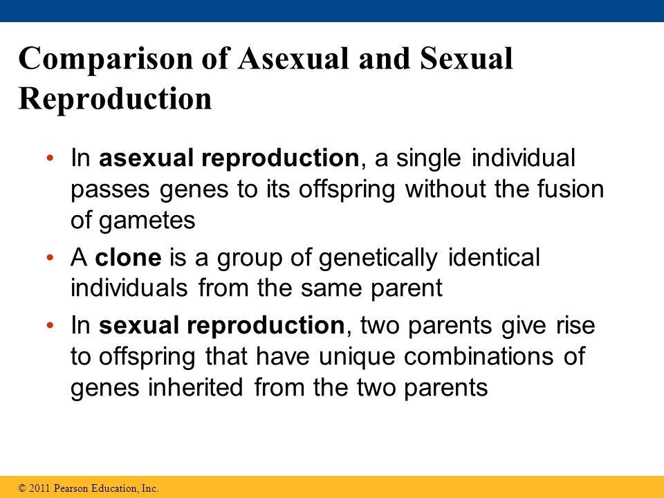 Comparison of Asexual and Sexual Reproduction In asexual reproduction, a single individual passes genes to its offspring without the fusion of gametes