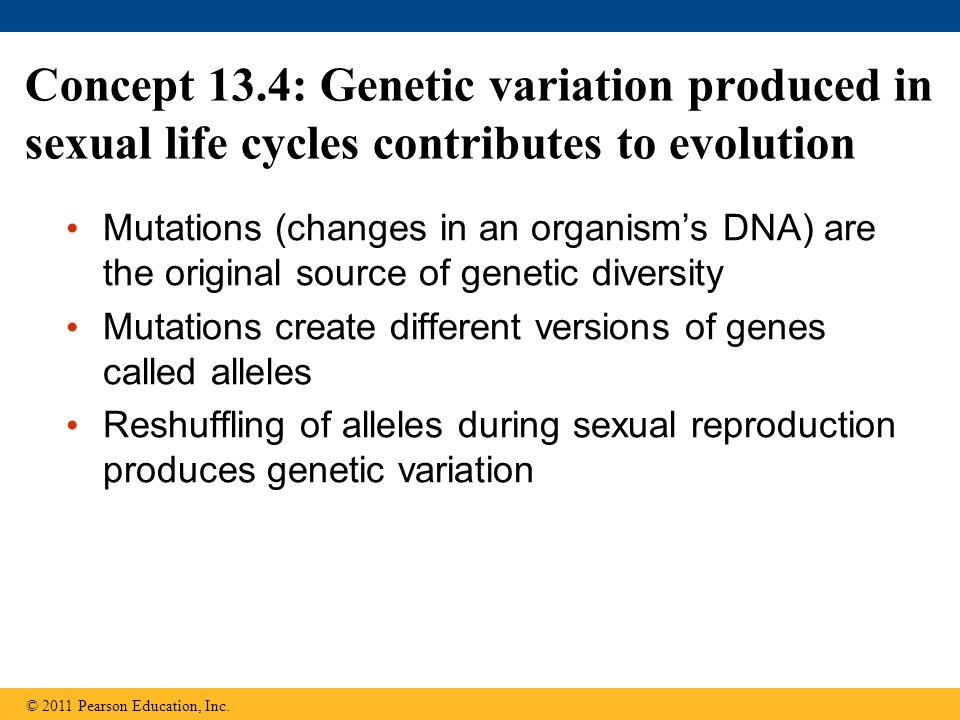 Concept 13.4: Genetic variation produced in sexual life cycles contributes to evolution Mutations (changes in an organism's DNA) are the original sour