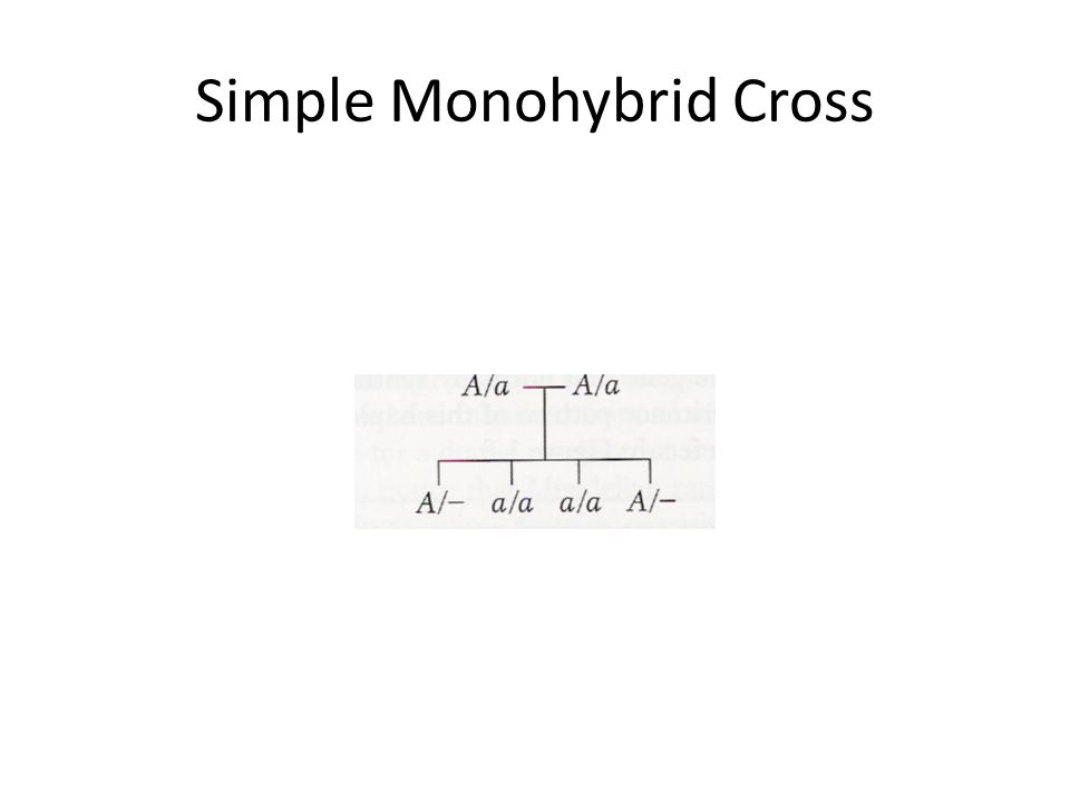 Simple Monohybrid Cross