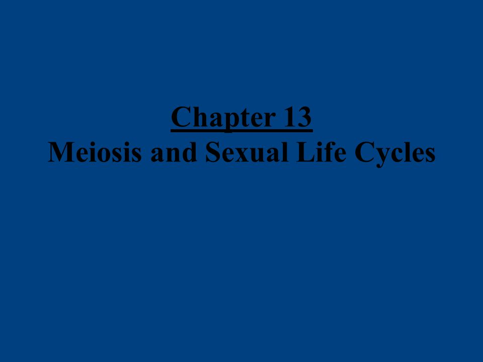 –2.Let's discuss the role of meiosis in the human life cycle.