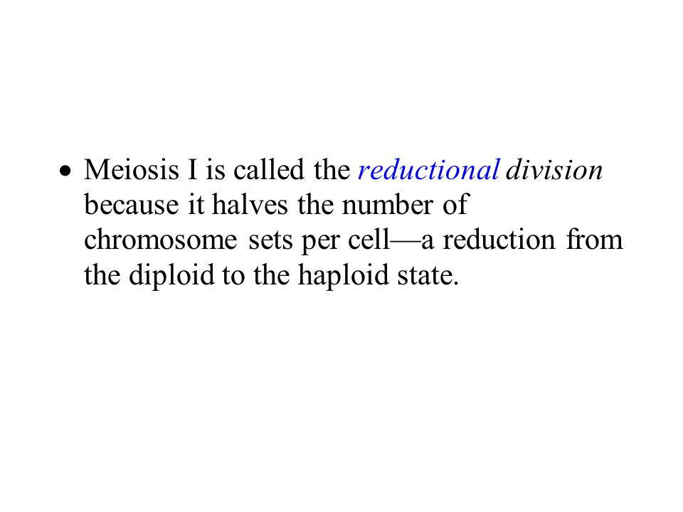  Meiosis I is called the reductional division because it halves the number of chromosome sets per cell—a reduction from the diploid to the haploid st