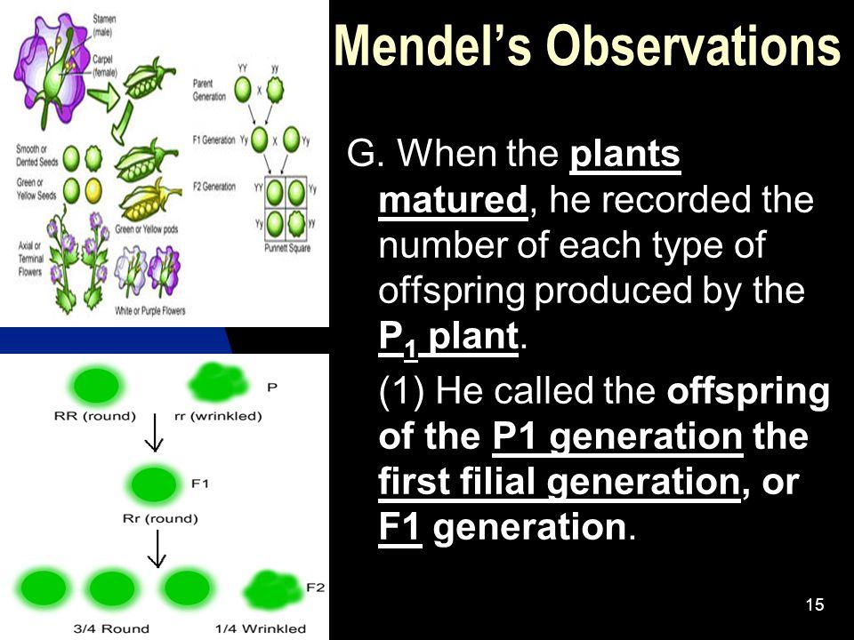5/11/201515 Mendel's Observations G.