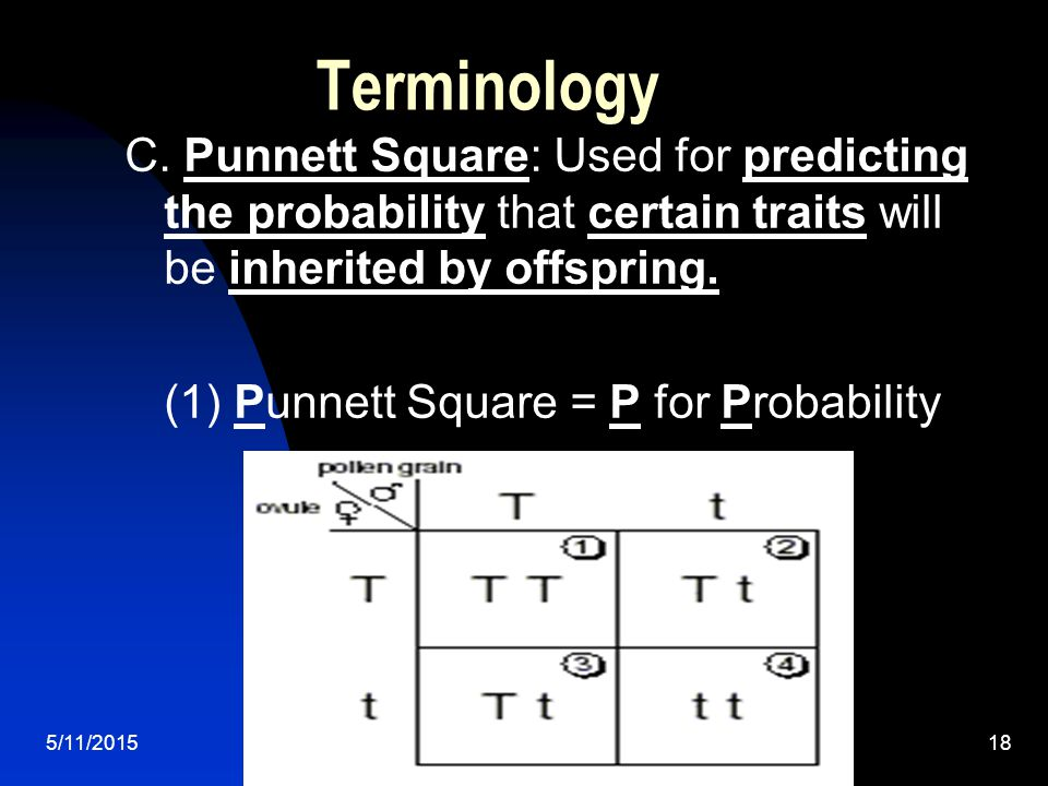 5/11/201518 Terminology C. Punnett Square: Used for predicting the probability that certain traits will be inherited by offspring. (1) Punnett Square