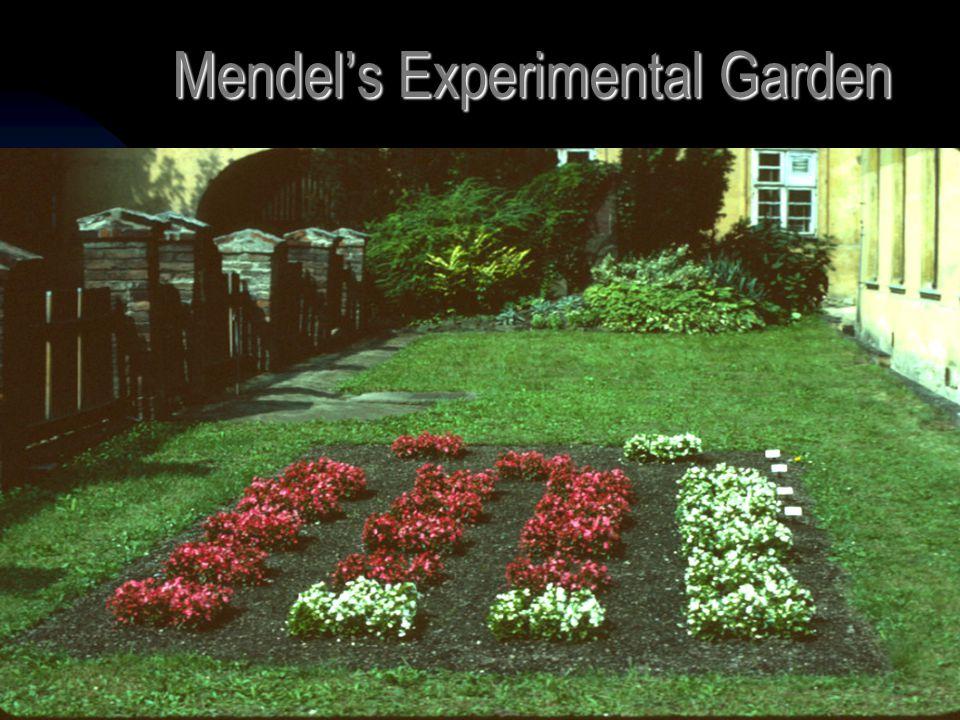 5/11/20154 Mendel's Experimental Garden