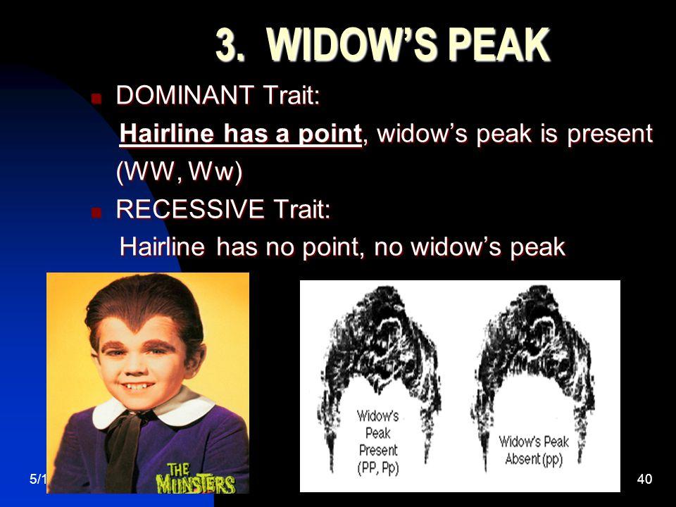 5/11/201540 3. WIDOW'S PEAK DOMINANT Trait: DOMINANT Trait: Hairline has a point, widow's peak is present Hairline has a point, widow's peak is presen
