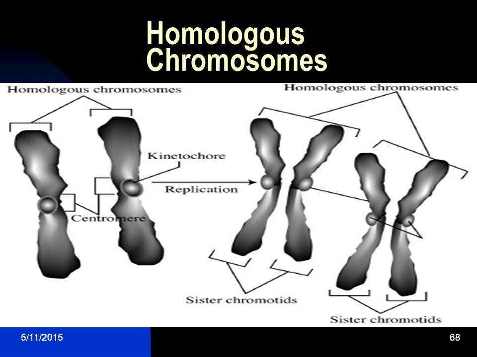 5/11/201568 Homologous Chromosomes