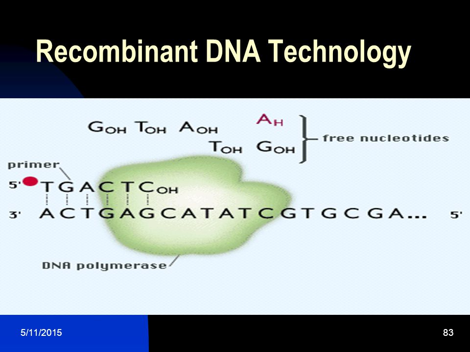 5/11/201583 Recombinant DNA Technology