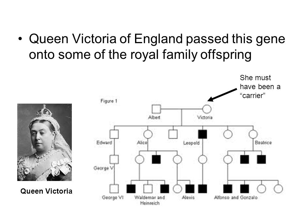 """Queen Victoria of England passed this gene onto some of the royal family offspring She must have been a """"carrier"""" Queen Victoria"""