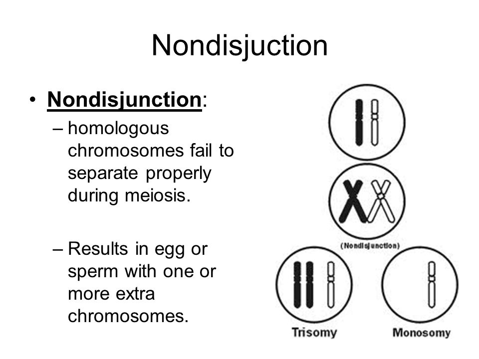 Nondisjuction Nondisjunction: –homologous chromosomes fail to separate properly during meiosis. –Results in egg or sperm with one or more extra chromo