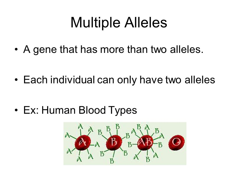 Possible Blood Types: A, B, AB, O –There are 3 alleles for blood type (A, B, O) –A and B are codominant alleles (I A, I B ) –O is a recessive allele (i)