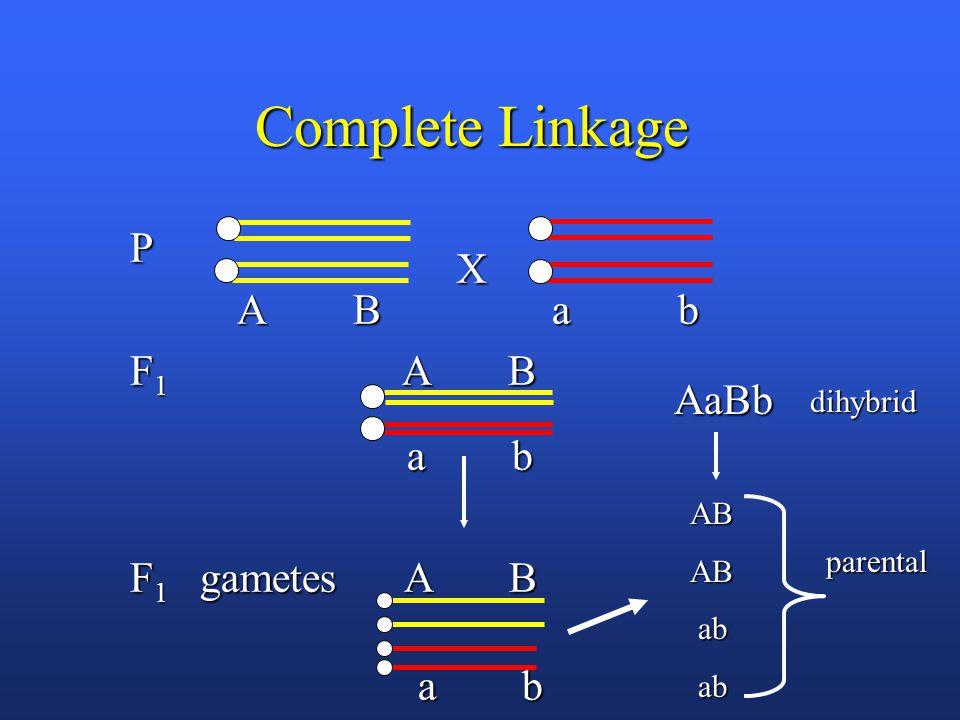 Complete Linkage P A B a b A B a b F 1 A B a b a b F 1 gametes A B a b a b X dihybrid ABAB AaBb parental