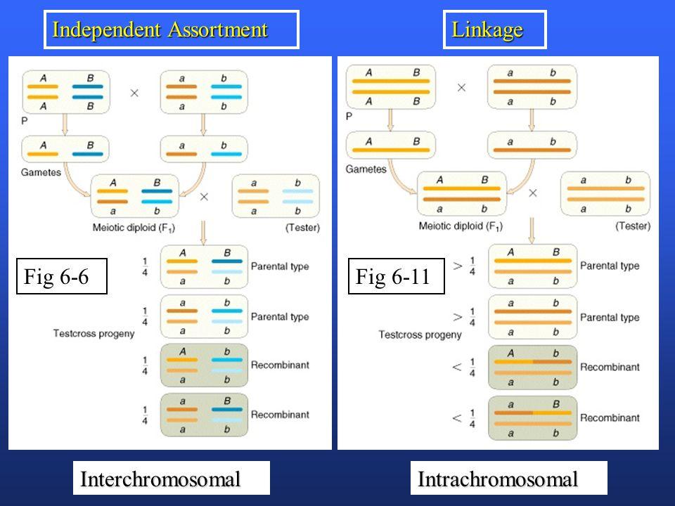 Fig 6-6 Independent Assortment Linkage Fig 6-11 InterchromosomalIntrachromosomal