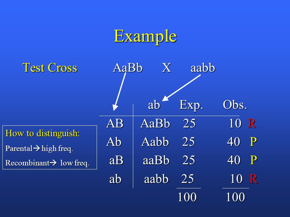 Example Test Cross AaBb X aabb ab Exp. Obs. ab Exp.