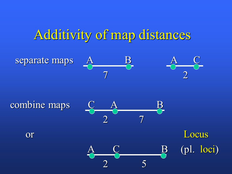 Additivity of map distances separate maps A B A C separate maps A B A C 7 2 7 2 combine maps C A B 2 7 2 7 or Locus or Locus A C B (pl.