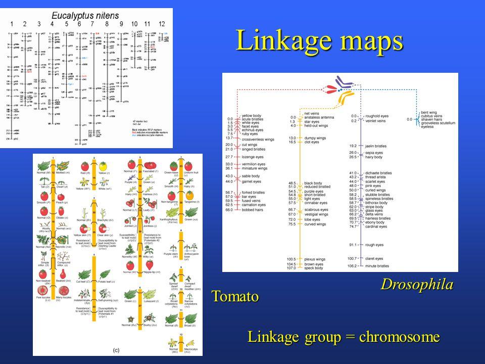 Linkage maps Tomato Drosophila Linkage group = chromosome