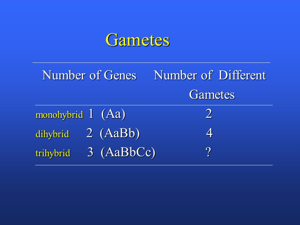 Gametes Number of Genes Number of Different Number of Genes Number of Different Gametes Gametes monohybrid 1 (Aa) 2 dihybrid 2 (AaBb) 4 trihybrid 3 (AaBbCc)