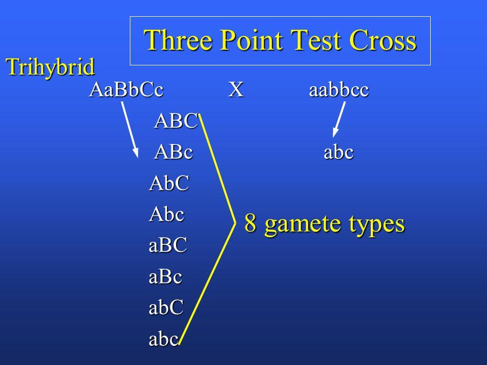 Three Point Test Cross AaBbCc X aabbcc AaBbCc X aabbcc ABC ABC ABc abc ABc abc AbC AbC Abc Abc aBC aBC aBc aBc abC abC abc abc 8 gamete types Trihybrid
