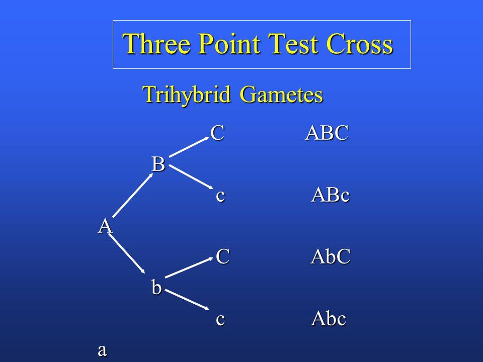 Three Point Test Cross C ABC C ABC B c ABc c ABcA C AbC C AbC b c Abc c Abca Trihybrid Gametes