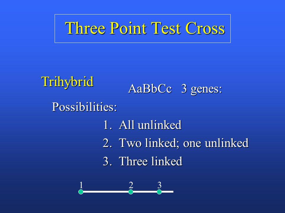 Three Point Test Cross AaBbCc 3 genes: AaBbCc 3 genes: Possibilities: Possibilities: 1.
