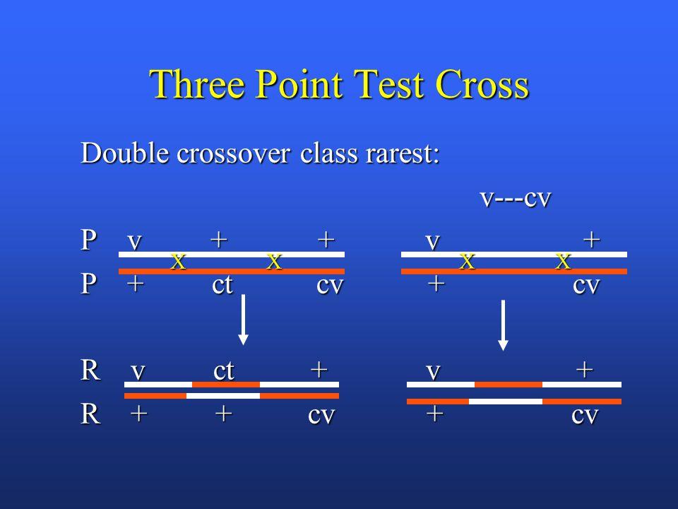 Three Point Test Cross Double crossover class rarest: v---cv v---cv P v + + v + P + ct cv + cv R v ct + v + R + + cv + cv XX XX