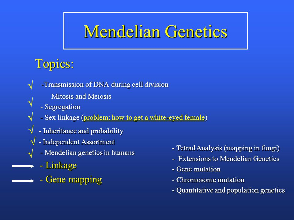 Mendelian Genetics Topics: -Transmission of DNA during cell division -Transmission of DNA during cell division Mitosis and Meiosis Mitosis and Meiosis - Segregation - Segregation - Sex linkage (problem: how to get a white-eyed female) - Sex linkage (problem: how to get a white-eyed female) - Inheritance and probability - Inheritance and probability - Independent Assortment - Independent Assortment - Mendelian genetics in humans - Mendelian genetics in humans - Linkage - Linkage - Gene mapping - Gene mapping - Tetrad Analysis (mapping in fungi) - Extensions to Mendelian Genetics - Gene mutation - Chromosome mutation - Quantitative and population genetics      
