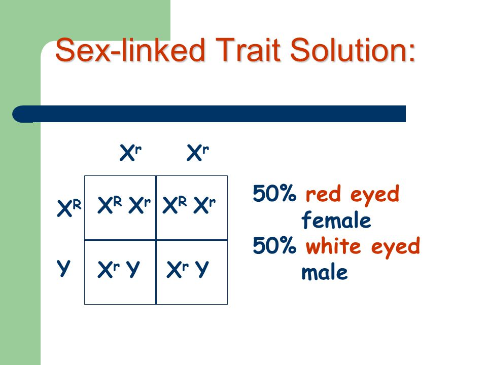 3 Sex-linked Trait Problem Example: Eye color in fruit flies (red-eyed male) x (white-eyed female) X R Y x X r X r Remember: the Y chromosome in males does not carry traits.