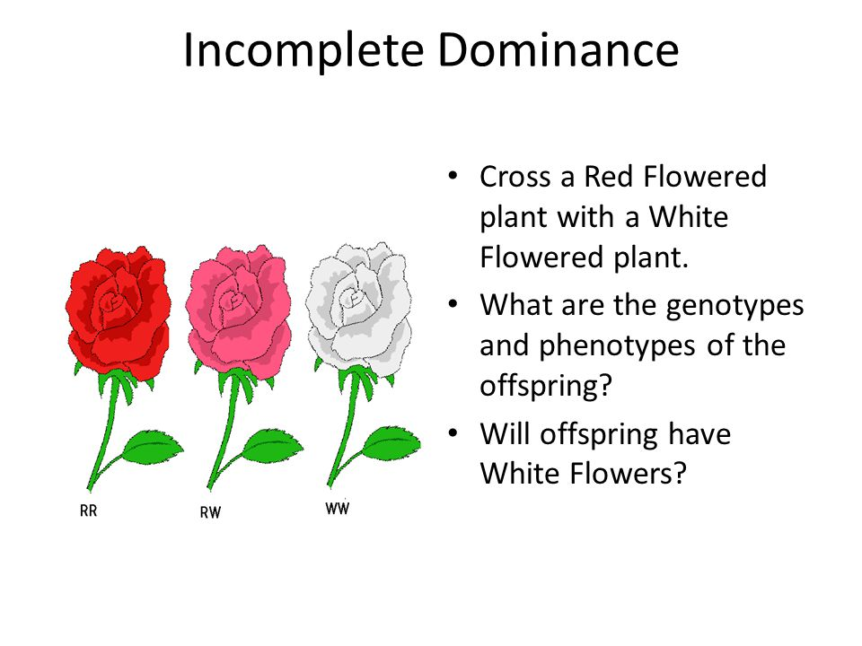 Incomplete Dominance Cross a Red Flowered plant with a White Flowered plant.