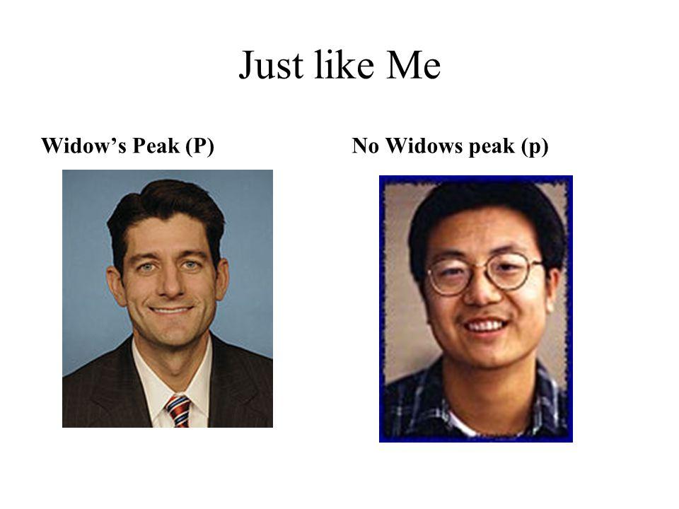 Just like Me Widow's Peak (P)No Widows peak (p)
