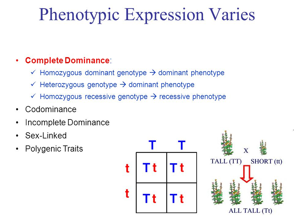 Complete Dominance: Homozygous dominant genotype  dominant phenotype Heterozygous genotype  dominant phenotype Homozygous recessive genotype  recessive phenotype Codominance Incomplete Dominance Sex-Linked Polygenic Traits Phenotypic Expression Varies