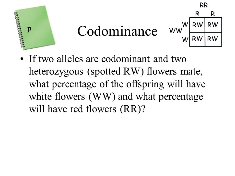 Codominance If two alleles are codominant and two heterozygous (spotted RW) flowers mate, what percentage of the offspring will have white flowers (WW) and what percentage will have red flowers (RR).