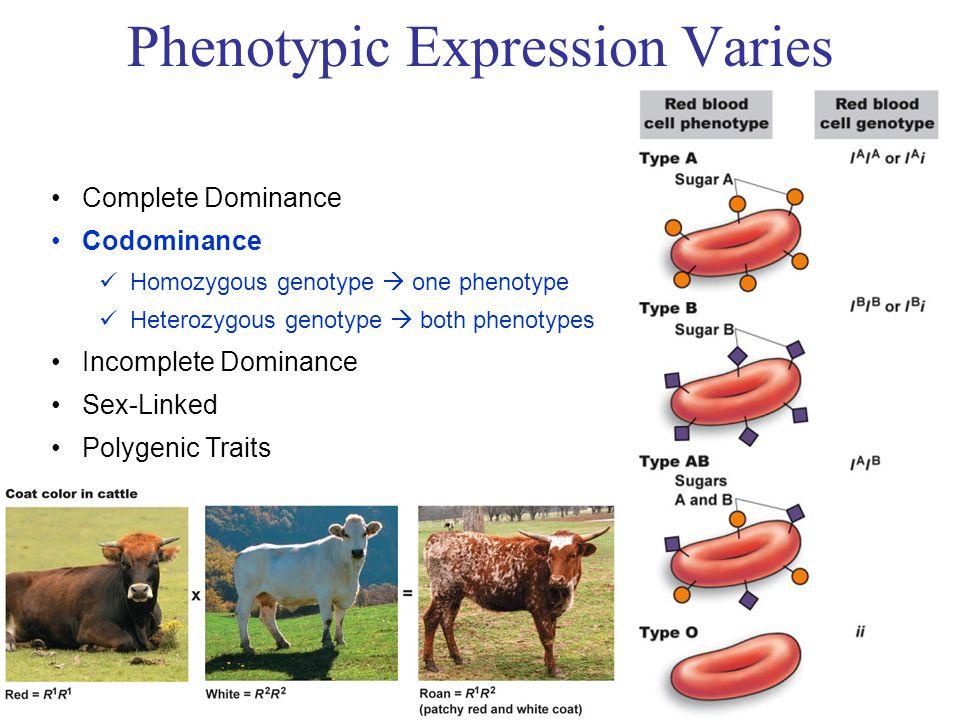 Complete Dominance Codominance Homozygous genotype  one phenotype Heterozygous genotype  both phenotypes Incomplete Dominance Sex-Linked Polygenic Traits Phenotypic Expression Varies R1 R1 R2 R1R2 R1R2 R R W RW RW